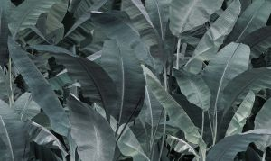 Banana Leaf  23ott 02