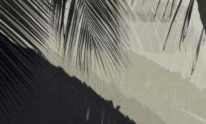 Palm Shadow 02 Low